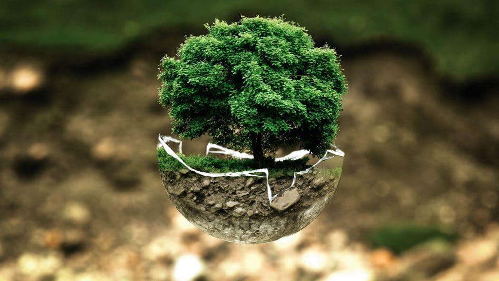 Photo de plante, protection de l'environnement